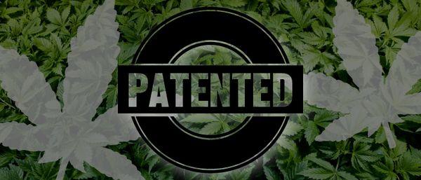 si-la-planta-de-la-marihuana-ha-sido-reestructurada-genéticamente-podría-patentarse