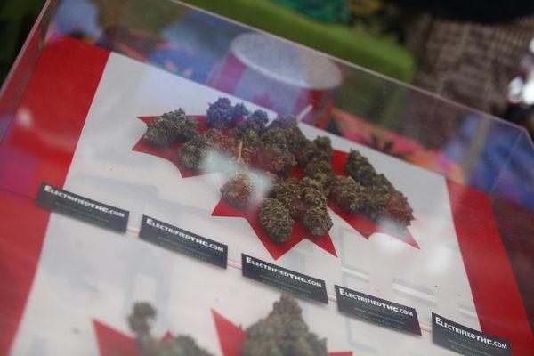 programma cannabis medicinale mondo