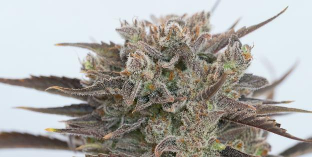 Purple Orange CBD