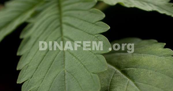 recetas medicinales con marihuana o cannabis