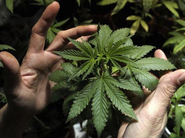 remedies you can create medicinal marijuana