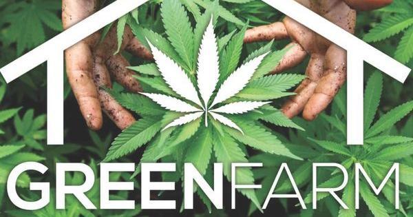 sentencia greenfarm cultivar marihuana